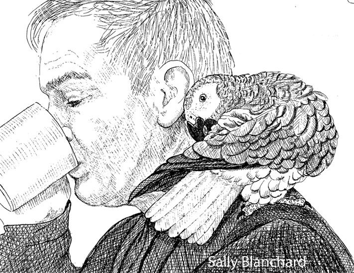 african grey drawing royalty free african grey parrot clip art vector images drawing african grey
