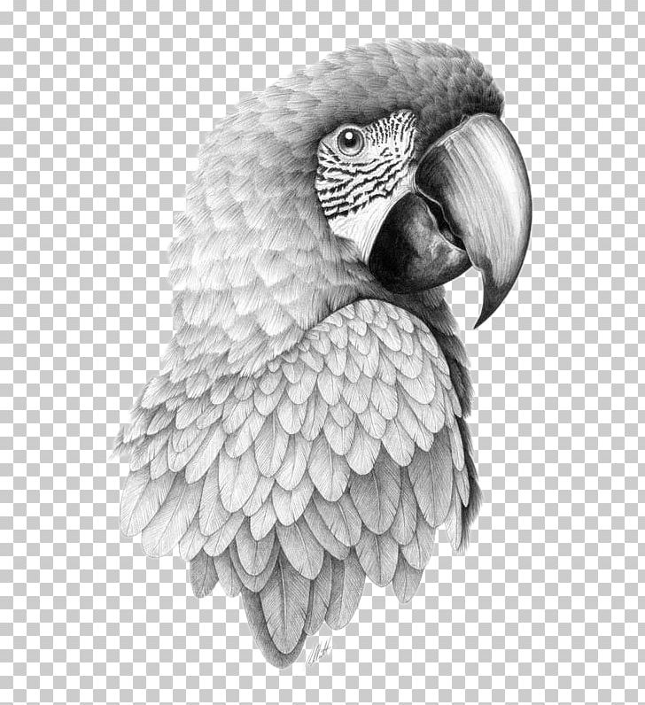 african grey drawing timneh african grey parrot wetcanvas african grey african grey drawing