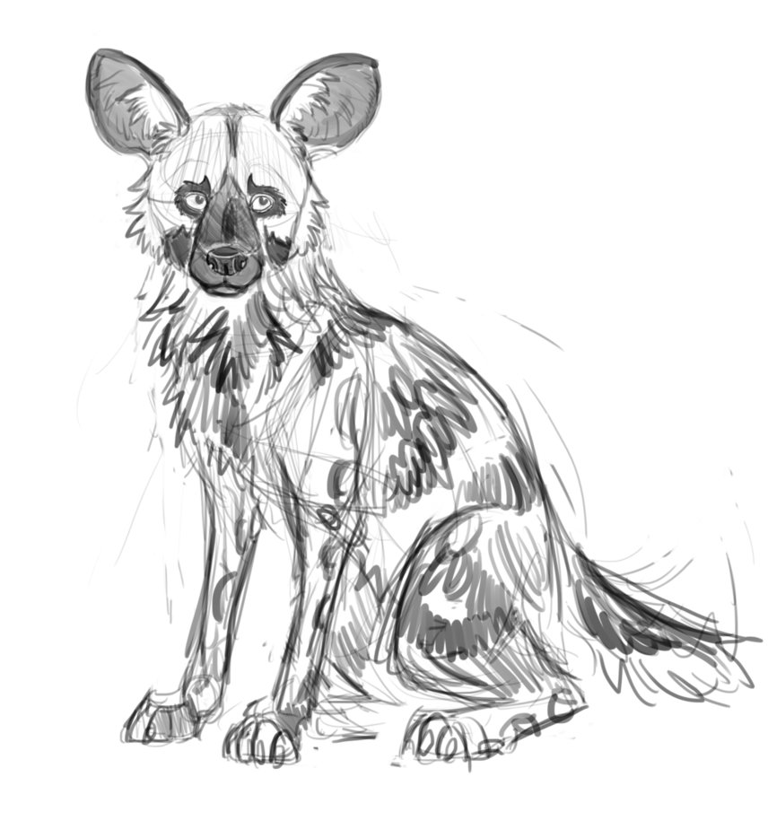 african wild dog coloring page free outline of a cow download free clip art free clip african coloring page dog wild