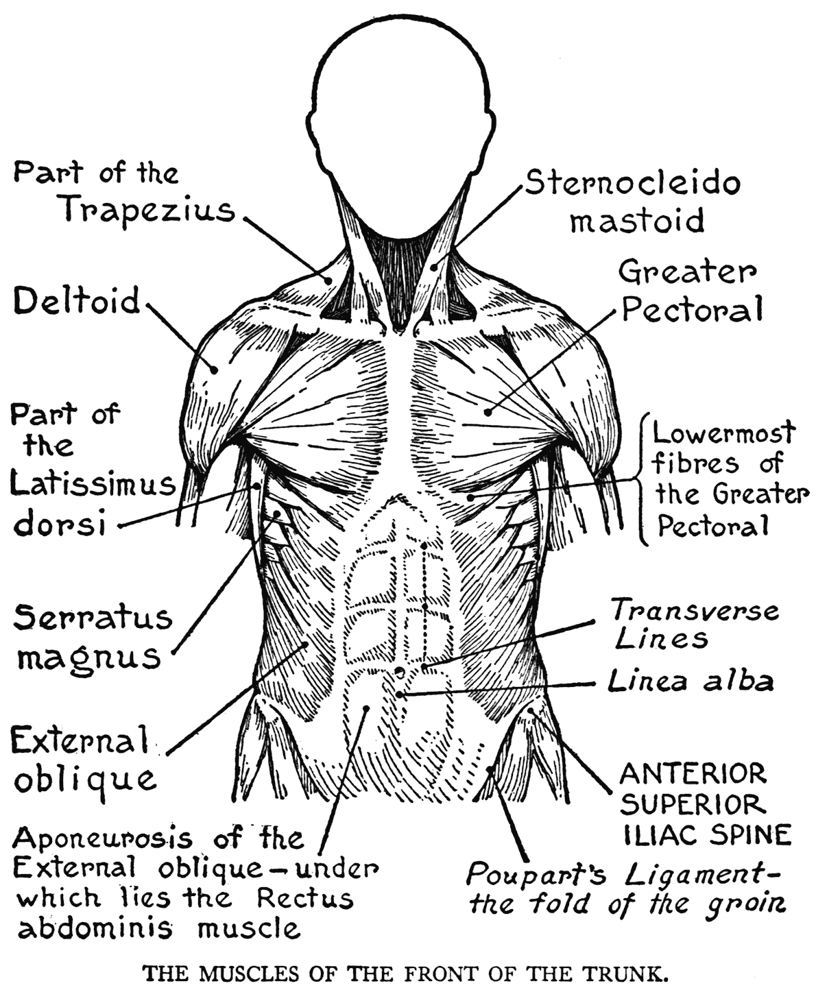 anatomy coloring book online 65 remarkable the anatomy coloring book pdf download photo anatomy coloring book online