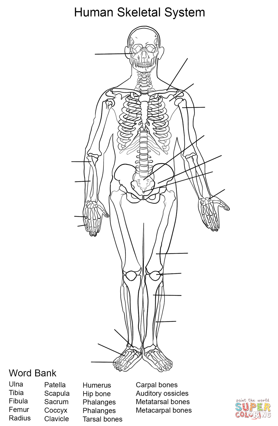 anatomy coloring book online anatomy drawing book download in 2020 anatomy coloring book anatomy coloring online
