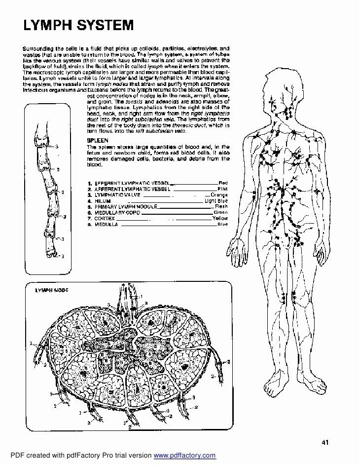 anatomy coloring book online pin on best coloring page for adults anatomy book online coloring