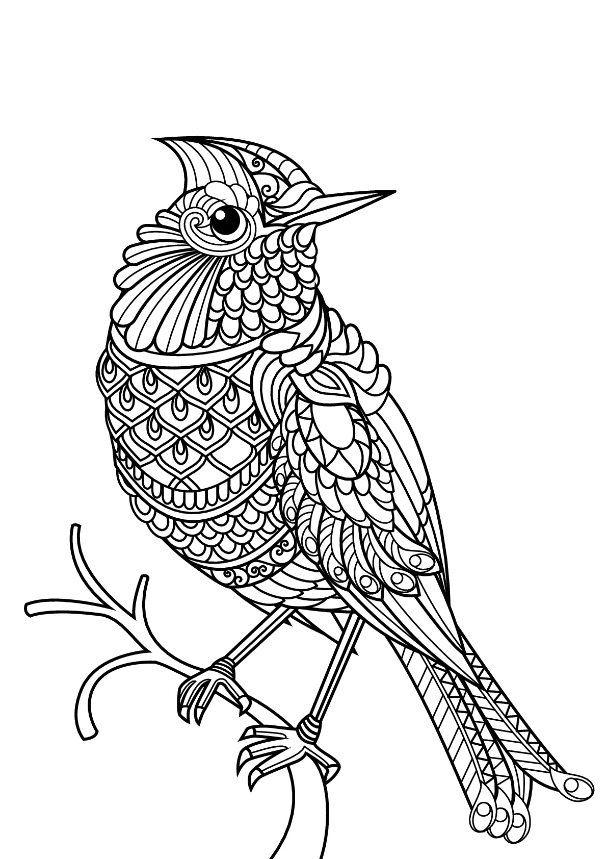 animal coloring pages free free book bird birds adult coloring pages coloring animal pages free