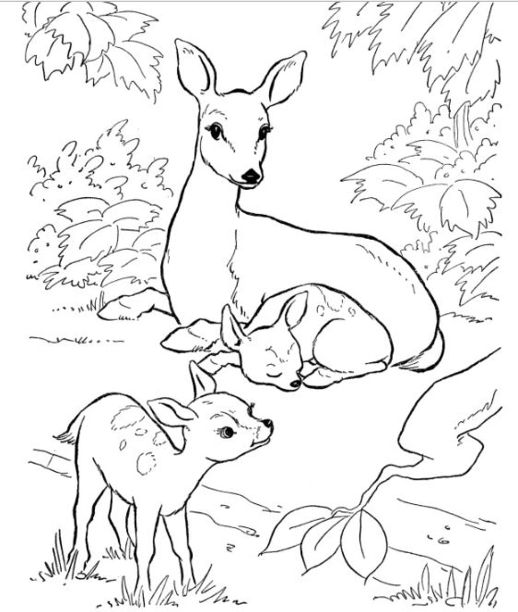 animal coloring pages free free printable ocean coloring pages for kids pages coloring animal free