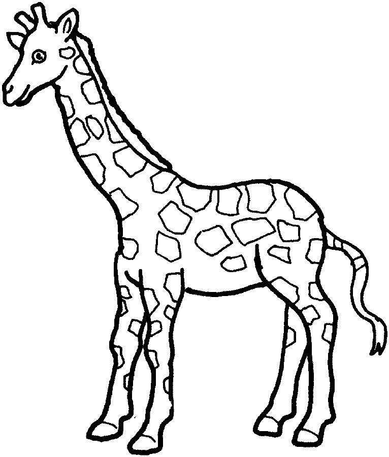 animal outlines to color animals outline pictures and coloring pages for little kids animal outlines to color