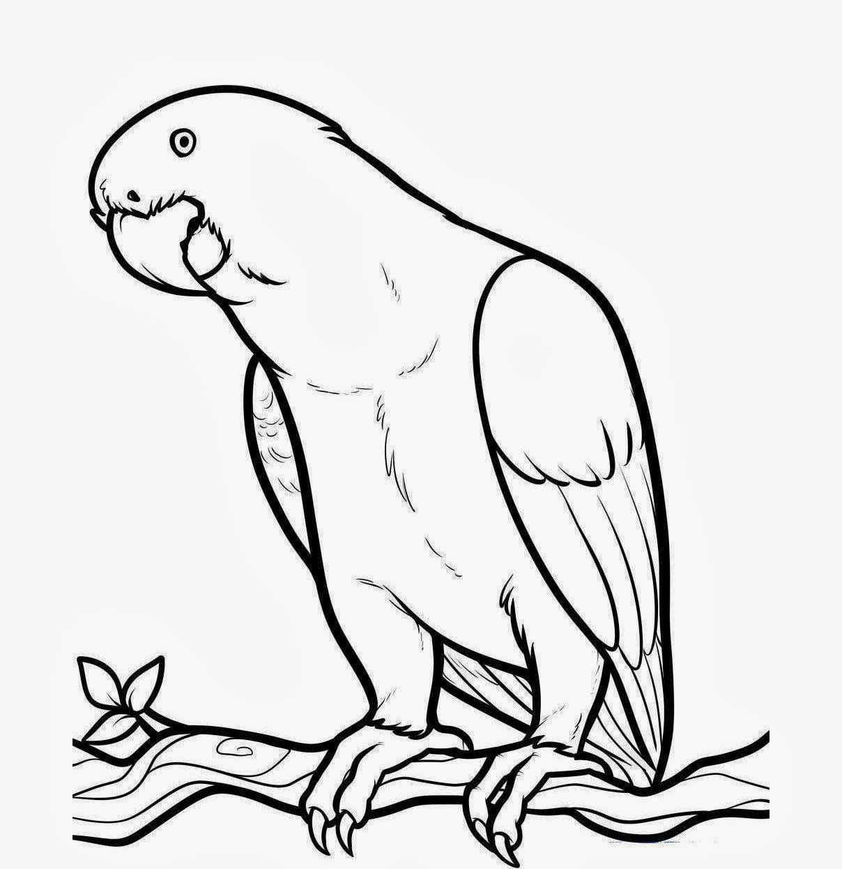 animal outlines to color coloring pages of a lizard coloring home outlines animal color to