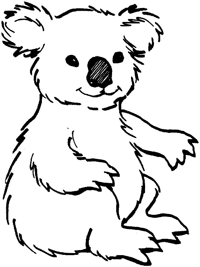 animal outlines to color free images of wild animals only outline download free outlines to animal color