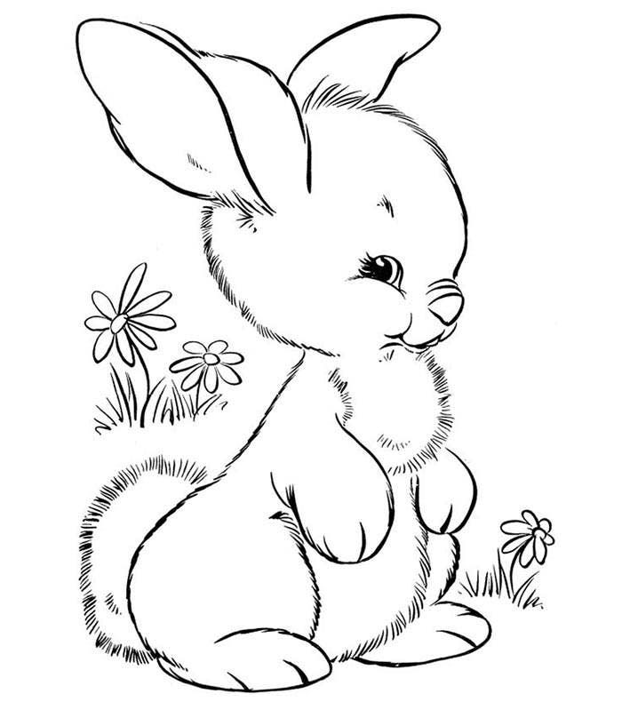 animal outlines to color jaguar coloring pages free printable kids coloring pages outlines to color animal