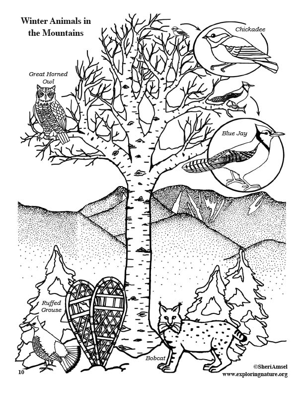 animals in winter coloring pages winter animals in the mountains coloring page coloring winter animals pages in