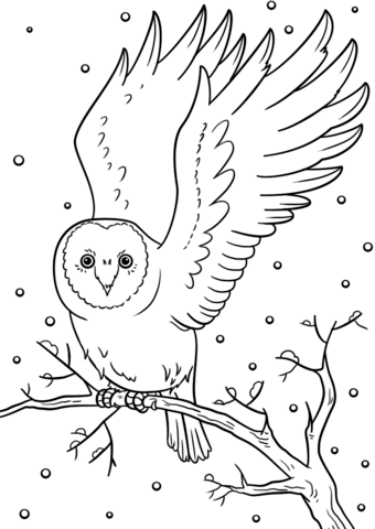 animals in winter coloring pages winter owl coloring page free printable coloring pages coloring winter pages animals in