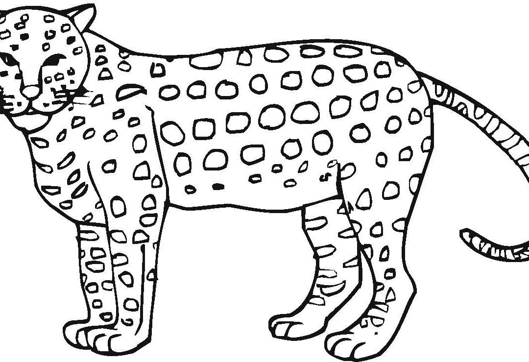 baby cheetah coloring pages 25 best cheetah coloring pages for your little ones coloring baby pages cheetah