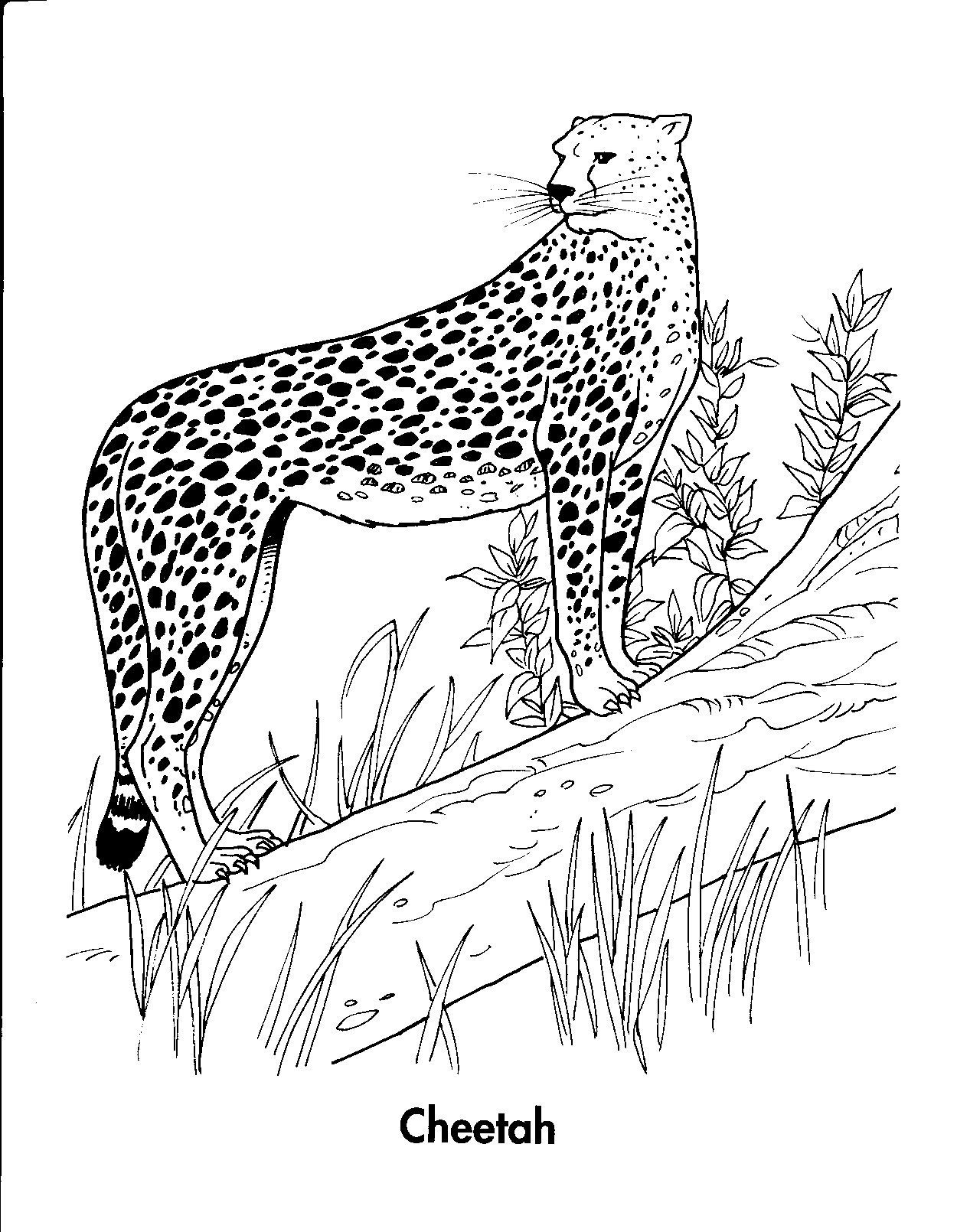 baby cheetah coloring pages baby cheetah coloring pages baby pages cheetah coloring