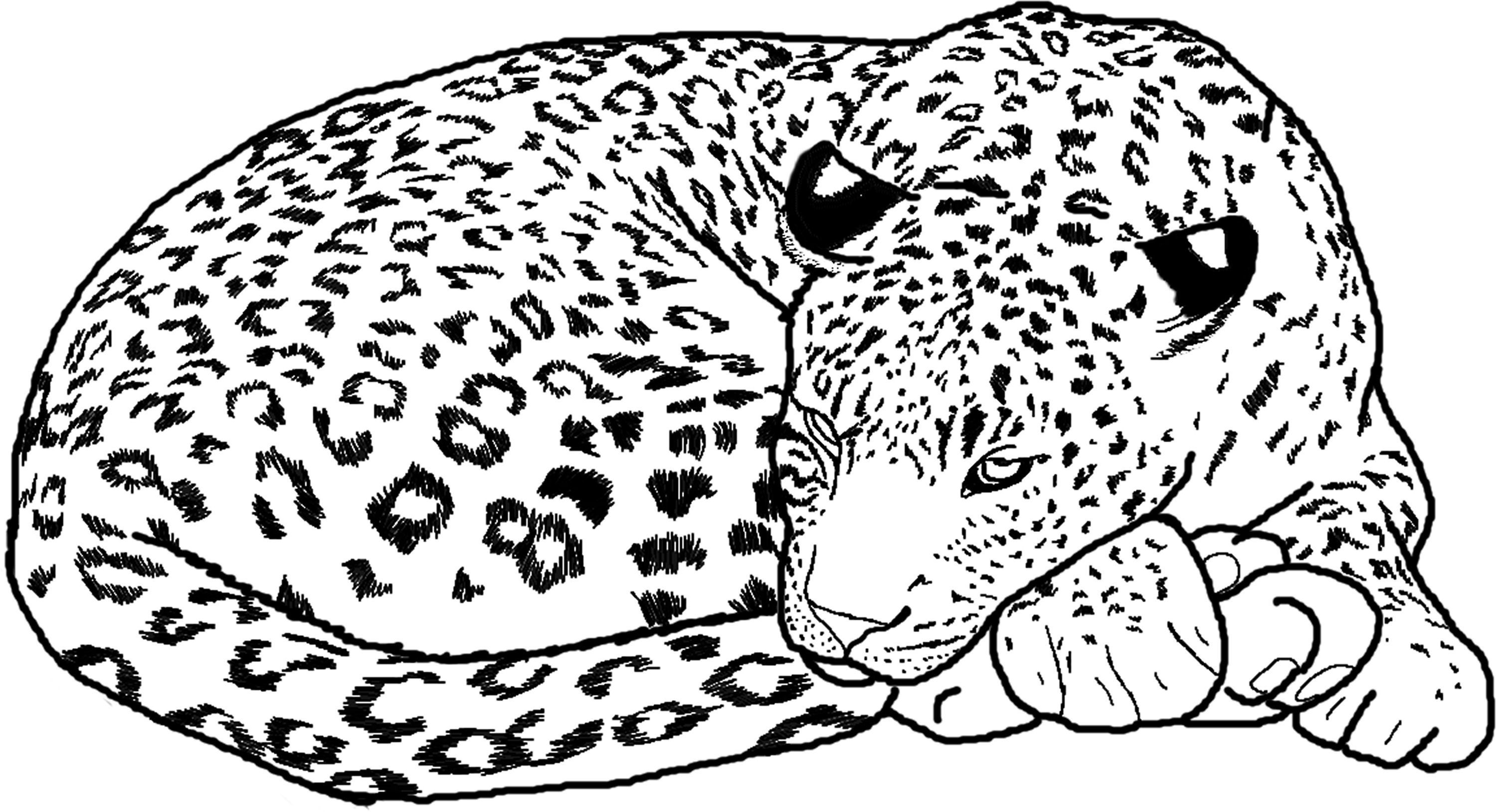 baby cheetah coloring pages baby cheetah for coloring pages coloring home cheetah baby pages coloring