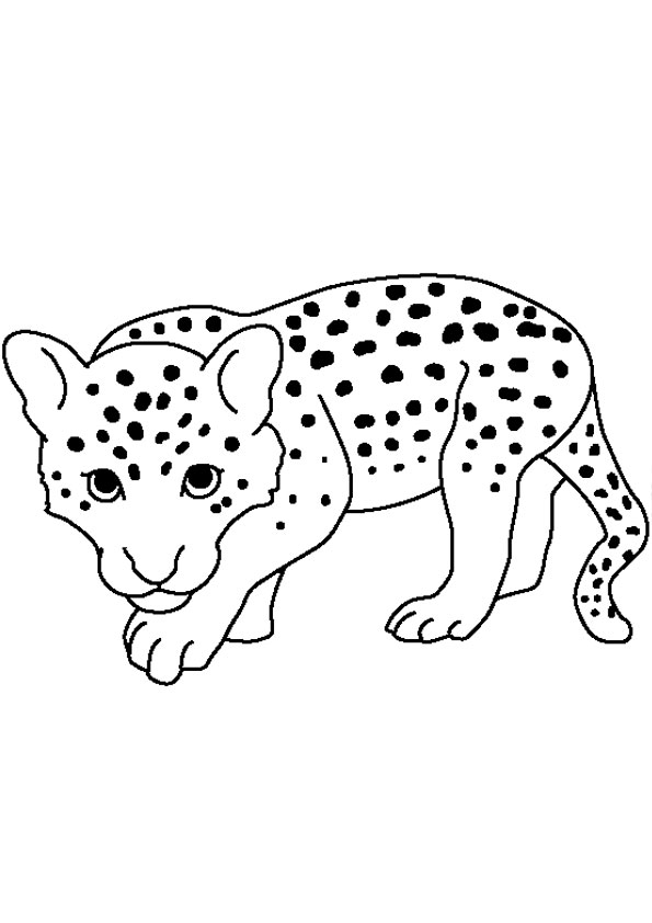 baby cheetah coloring pages cute baby cheetah coloring pages coloring home pages baby coloring cheetah