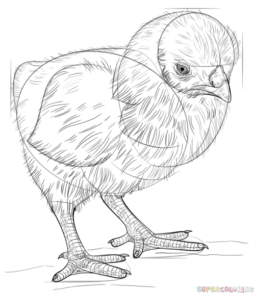 baby chick drawing how to draw a baby chick step by step drawing tutorials baby chick drawing