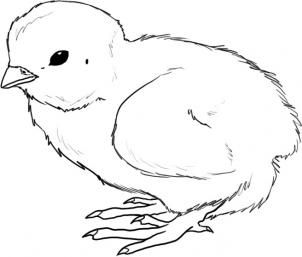 baby chick drawing pin on draw drawing chick baby