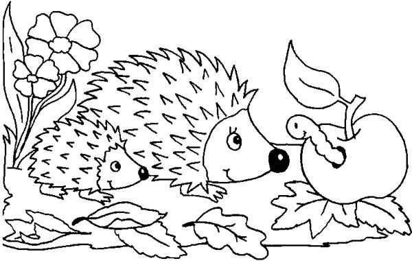baby hedgehog coloring pages baby hedgehogs colouring pages sketch coloring page hedgehog coloring baby pages