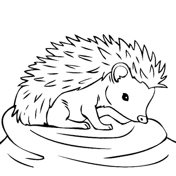 baby hedgehog coloring pages mobilecute hedgehog coloring coloring pages pages coloring hedgehog baby