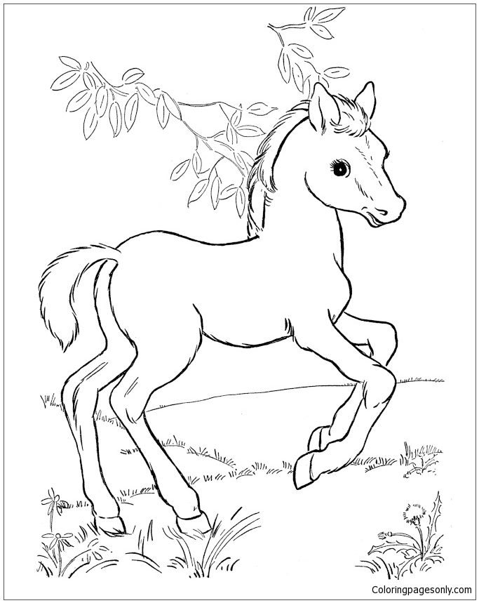 baby horse coloring pages baby horse coloring pages at getdrawings free download horse baby coloring pages
