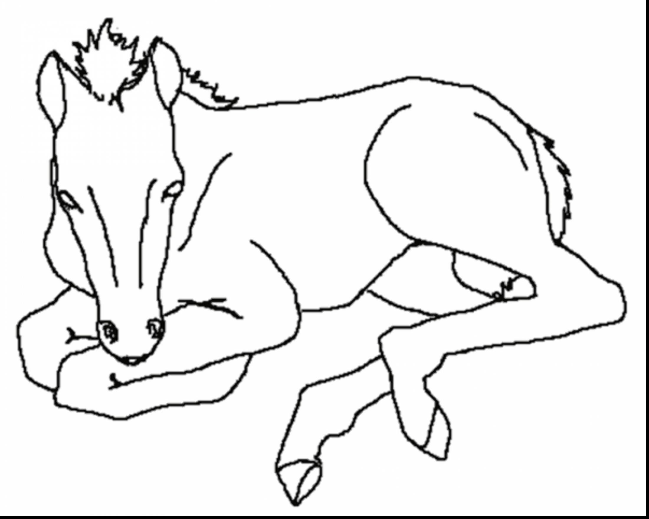 baby horse coloring pages baby horses coloring pages coloring pages pinterest coloring pages baby horse