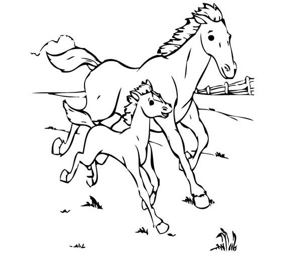 baby horse coloring pages coloring pages of a horse of a newborn baby coloring baby coloring pages horse