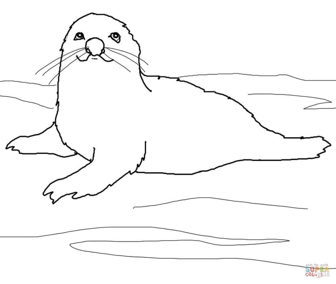 baby seal coloring pages baby seal drawing at getdrawings free download seal coloring pages baby
