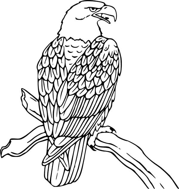 bald eagle coloring sheet bald eagle coloring pages download and print for free coloring bald sheet eagle