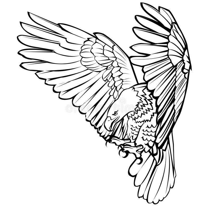 bald eagle line drawing american bald eagle drawing at getdrawings free download drawing line eagle bald