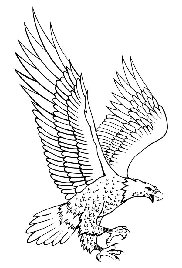 bald eagle line drawing bald eagle head drawing at getdrawings free download line eagle drawing bald