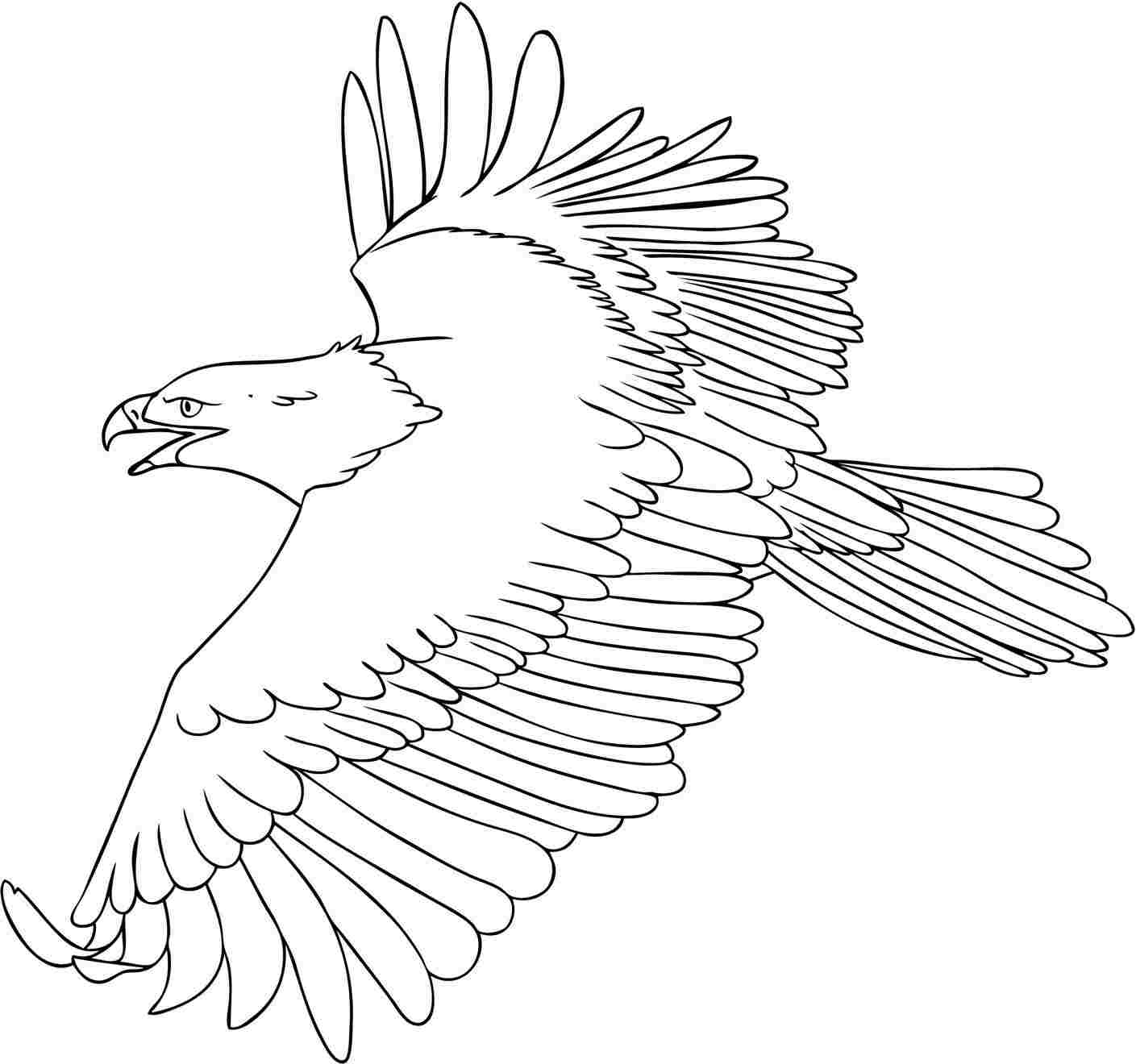 bald eagle line drawing bald eagle line drawing at getdrawings free download drawing bald line eagle