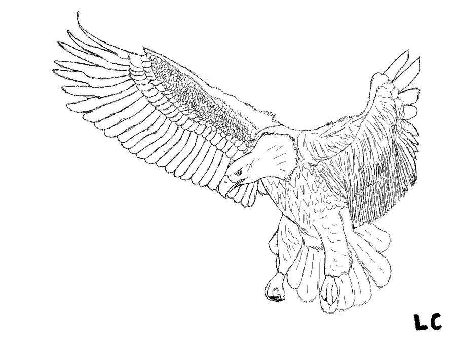 bald eagle line drawing eagle simple drawing at getdrawings free download line drawing bald eagle
