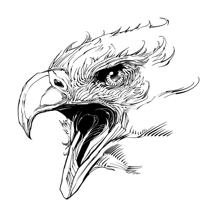 bald eagle line drawing how to draw a bald eagle drawingforallnet line eagle drawing bald