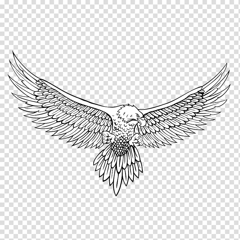 bald eagle line drawing ms paint flying bald eagle lineart by zeecaptein on line drawing bald eagle