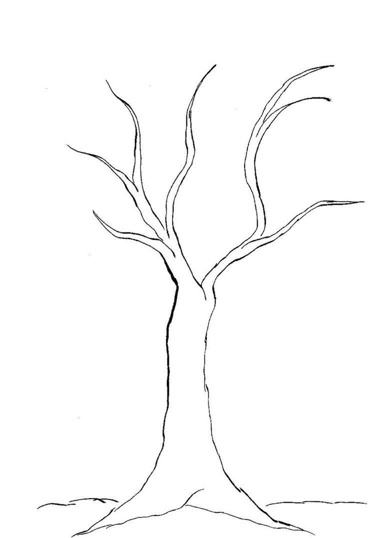 bare tree template coloring page usable k5 worksheets bare template tree