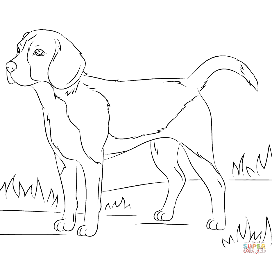 beagle puppy coloring pages beagle dog coloring page free printable coloring pages pages beagle puppy coloring