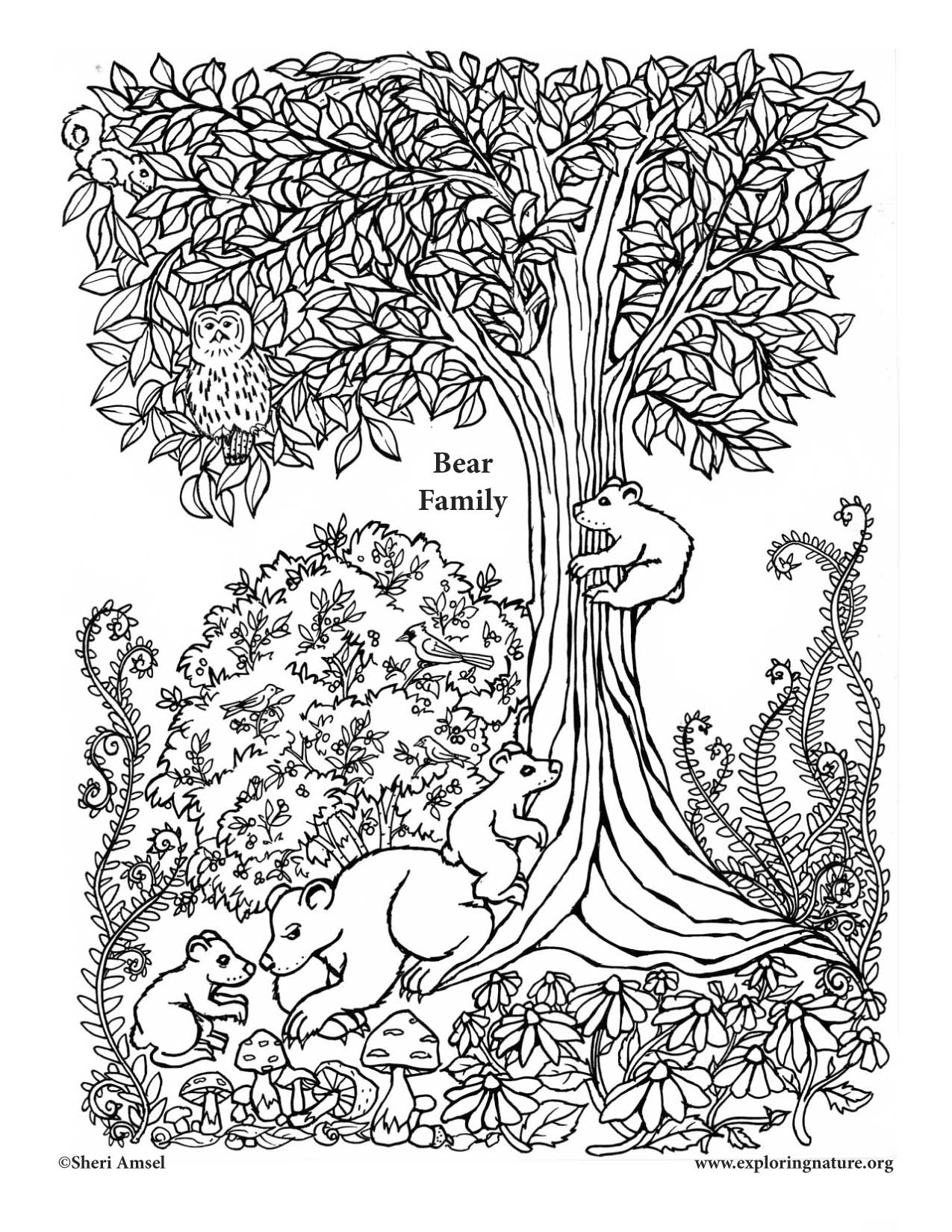 bear family coloring pages big grizzly bear family colouring pages picolour family bear coloring pages