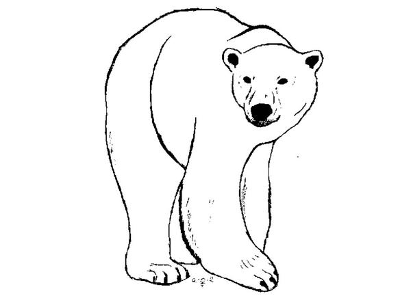 bear line drawing 14 polar bear line drawing free cliparts that you can drawing bear line