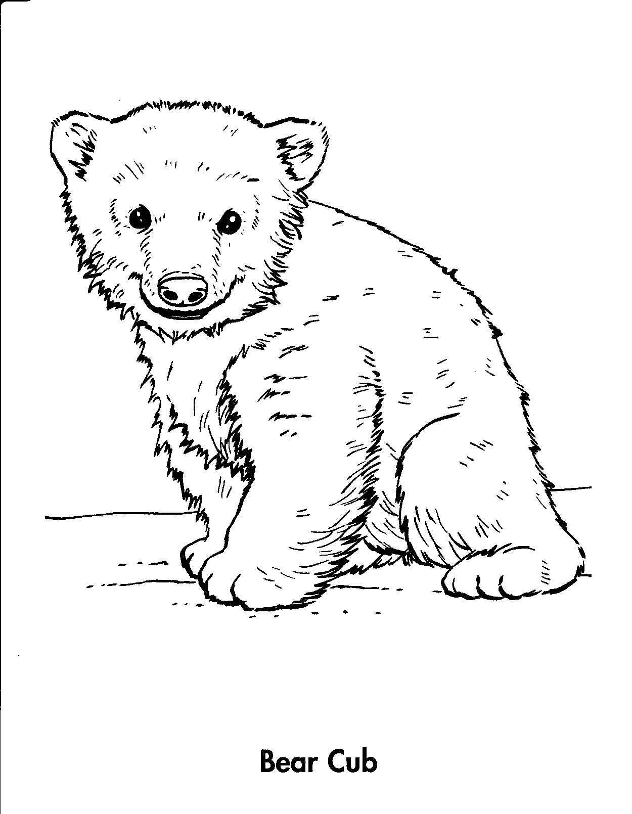 bear line drawing bear line drawing at getdrawings free download line drawing bear