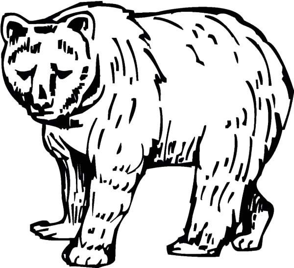 bear line drawing grizzly bear line drawing at getdrawings free download drawing bear line