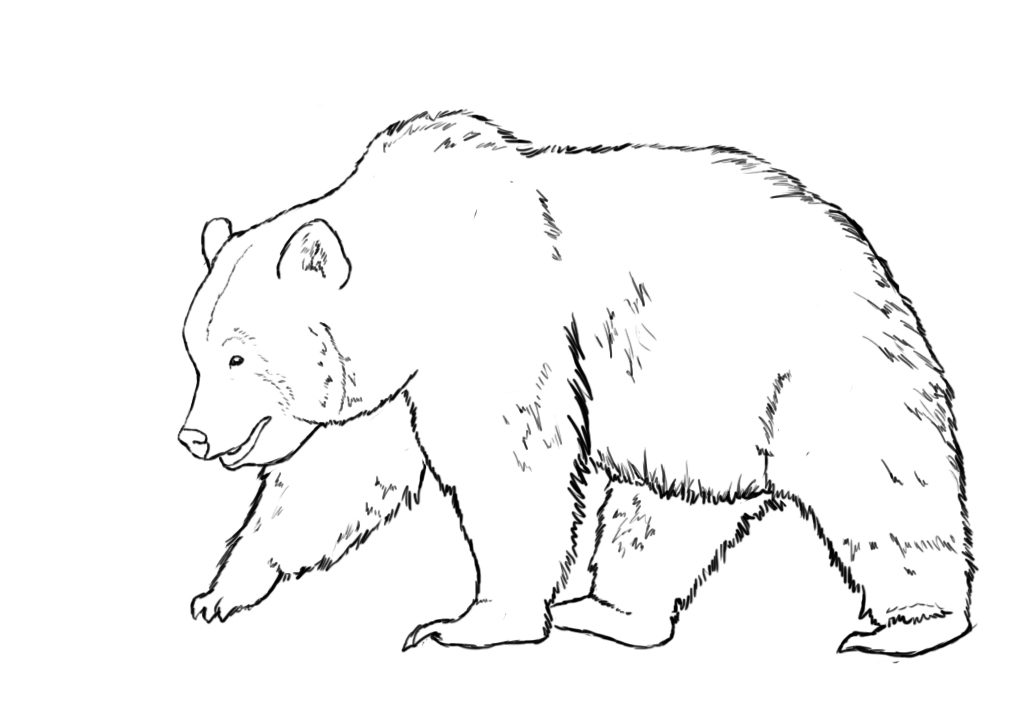 bear line drawing line drawing bear at getdrawings free download drawing line bear