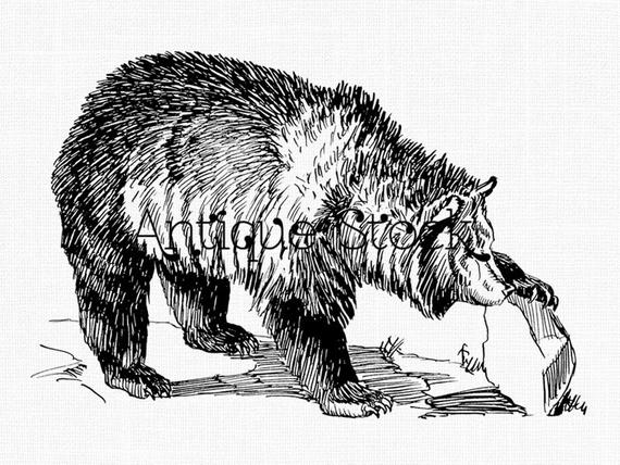 bear line drawing polar bear line drawing clipart best 256526 black bear line drawing bear