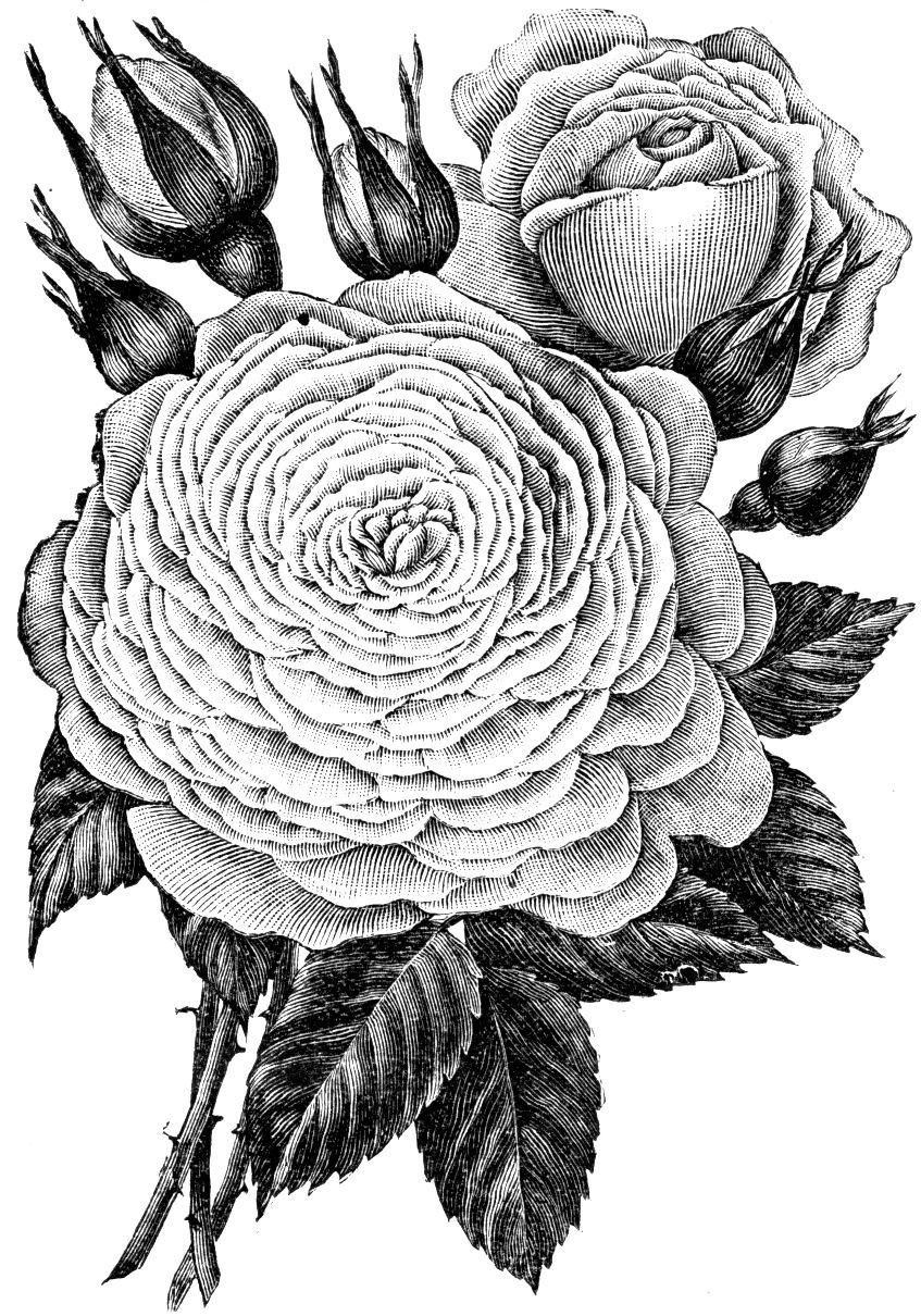 beautiful flowers coloring pages beautiful flower coloring pages flower coloring pages beautiful coloring flowers pages