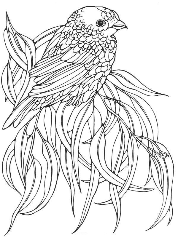 bird coloring pages for adults adult coloring pages sparrow birds zentangle doodle coloring for coloring pages adults bird