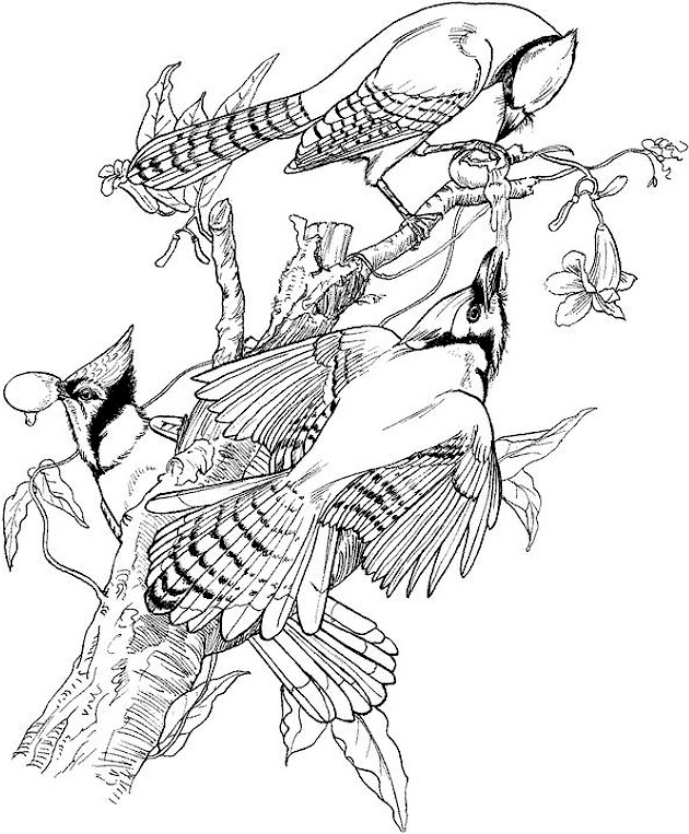 bird coloring pages for adults bird coloring page bird adults coloring pages for
