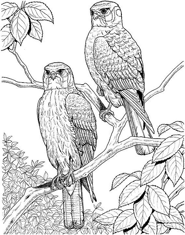 bird coloring pages for adults bird coloring page bird coloring for pages adults