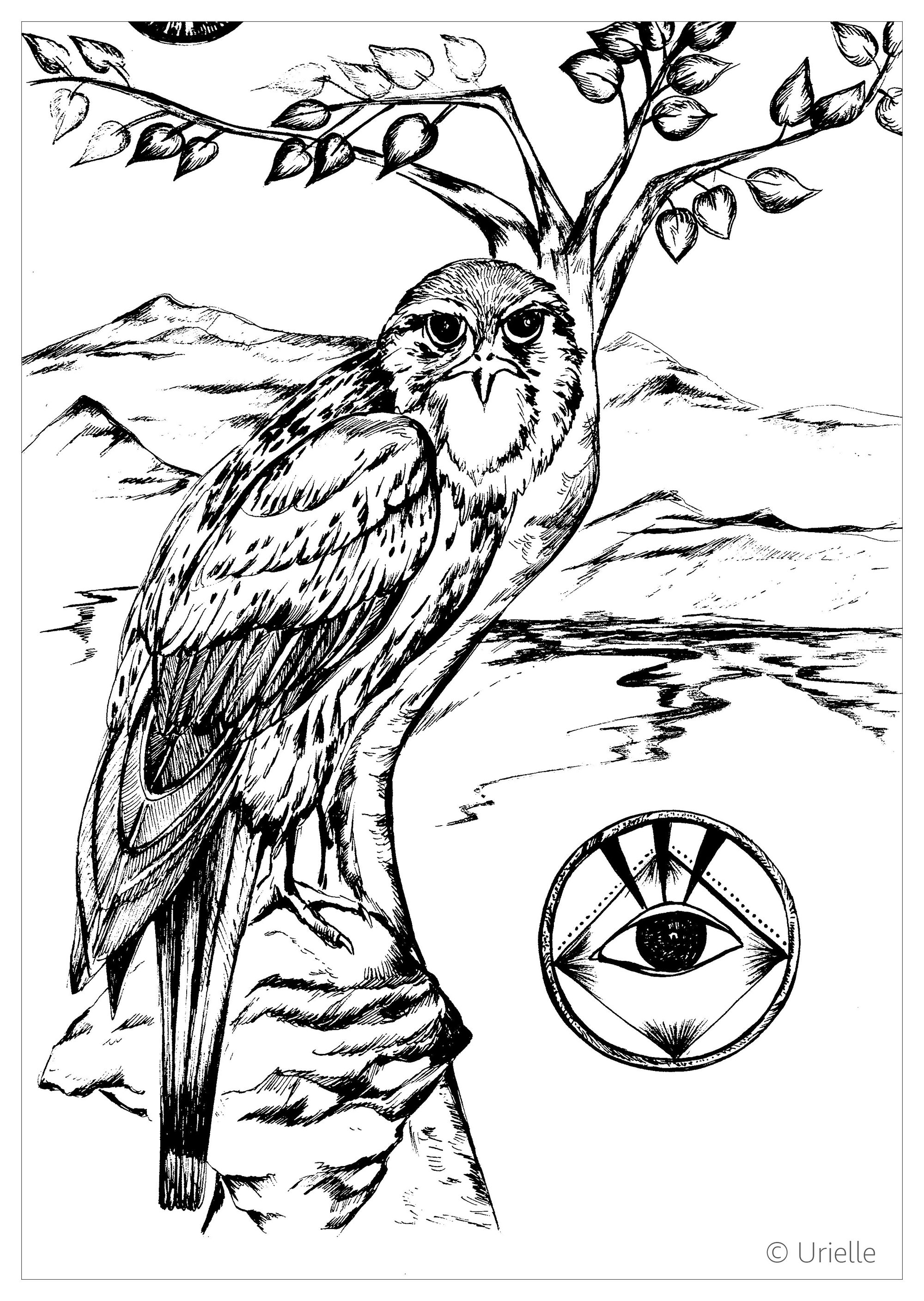 bird coloring pages for adults falcon birds adult coloring pages bird for pages adults coloring