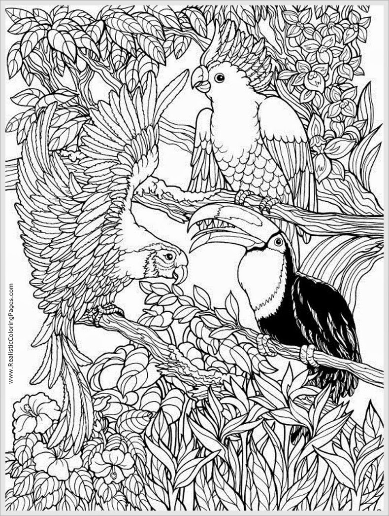 bird coloring pages for adults free printable adult coloring pages birds get coloring pages bird for coloring adults pages