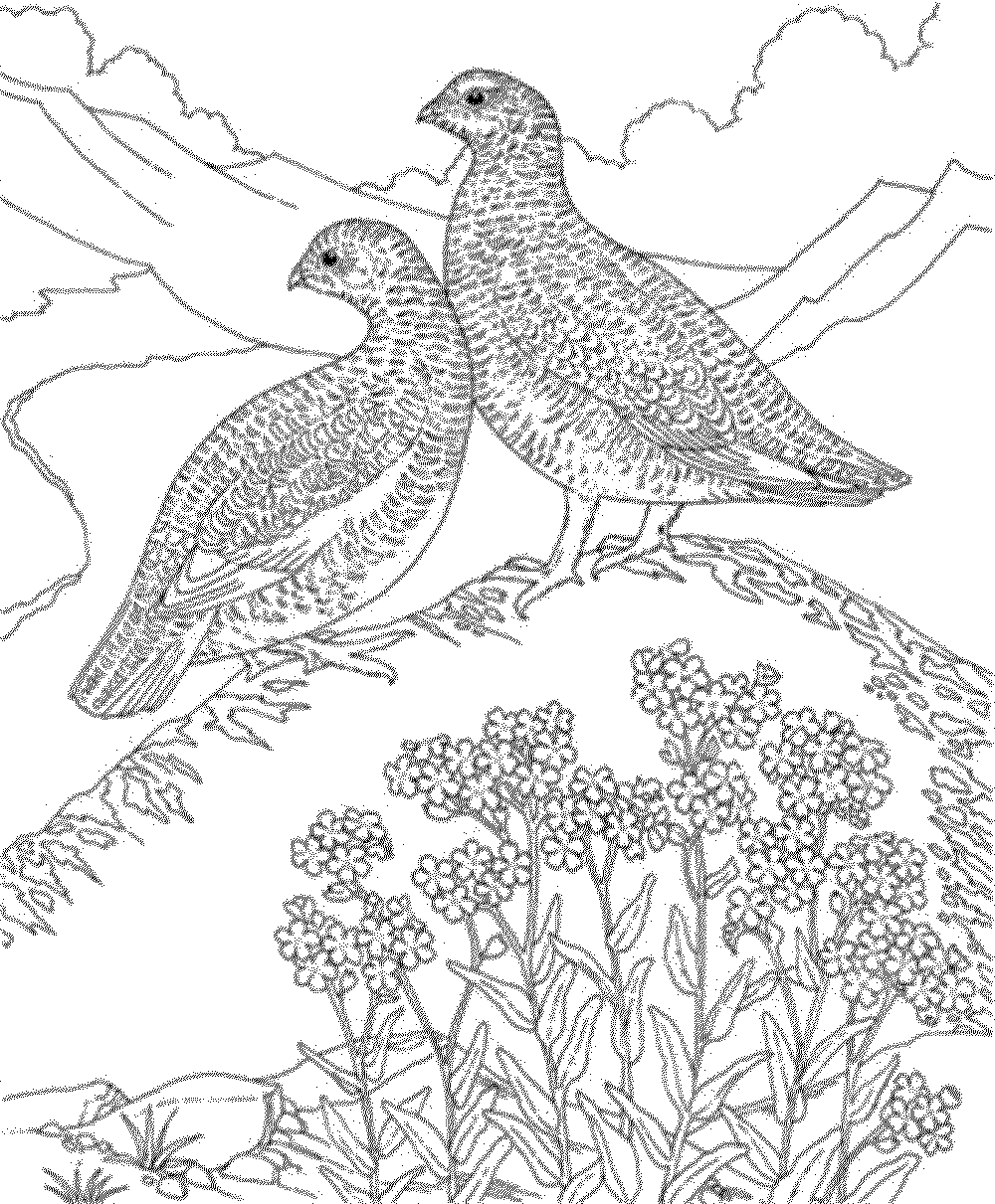bird coloring pages for adults hard bird coloring pages for adults bestappsforkidscom for coloring adults bird pages