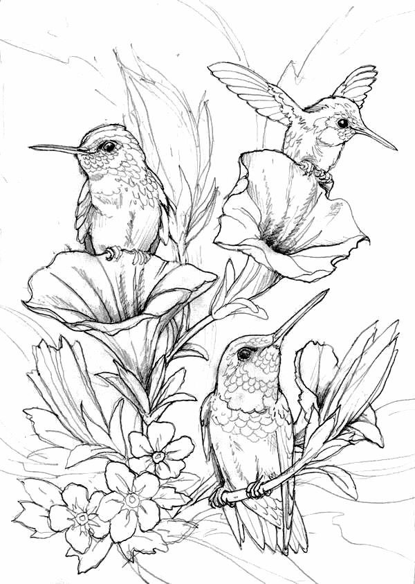 bird coloring pages for adults hung birds coloring page printables floral and plant adults bird coloring pages for