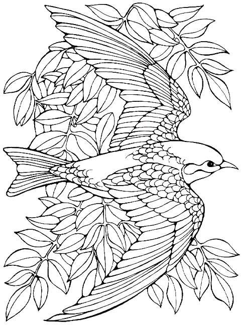 bird coloring pages for adults printable advanced bird coloring pages for adults free coloring bird for pages adults